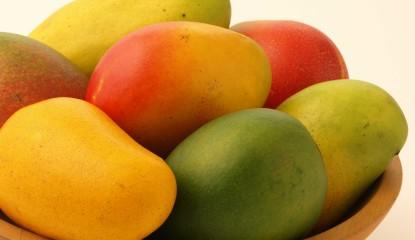mangos 415x240 - El mango y sus beneficios
