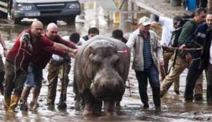 hipo 415x240 - Lluvias en Georgia dejan 11 muertos y fuga de animales de zoológico