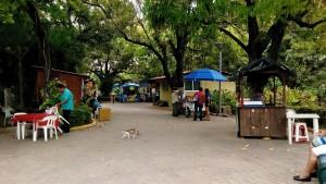 papagayo mercado