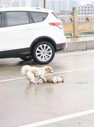 amigo-fiel-perro