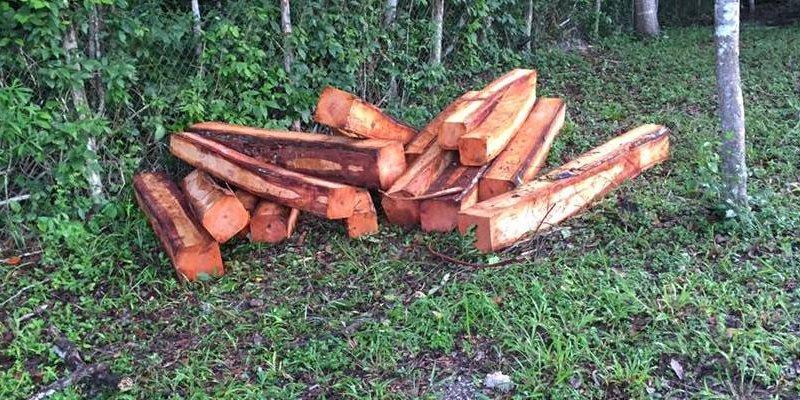 Trozos de madera