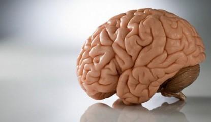 brain-cerebro_800x400