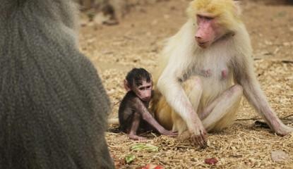babuinos bebe_800x400
