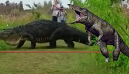 caiman florida dinosaurio enorme_800x400