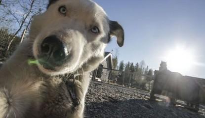 selfie-de-perro