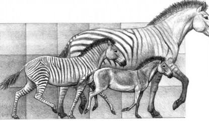 caballos_800x400