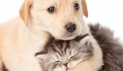 gato y perro 415x240 - Inicia Semana Nacional de Vacunación Antirrábica en Guerrero