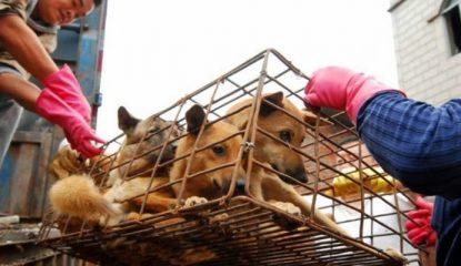 Perros confiscados