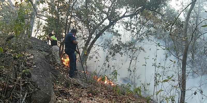 Consume incendio pastizales y encinos en El Veladero
