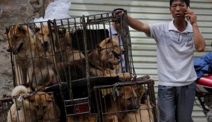 carne de perros 800x400 415x240 - No más perros y gatos en el menú de Taiwán