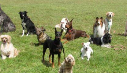 perros Noticias 415x240 - El mapa más completo de la evolución de las razas de perros