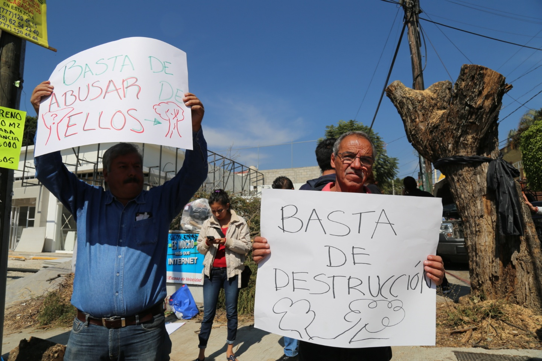 Protestan por destrucción de árboles