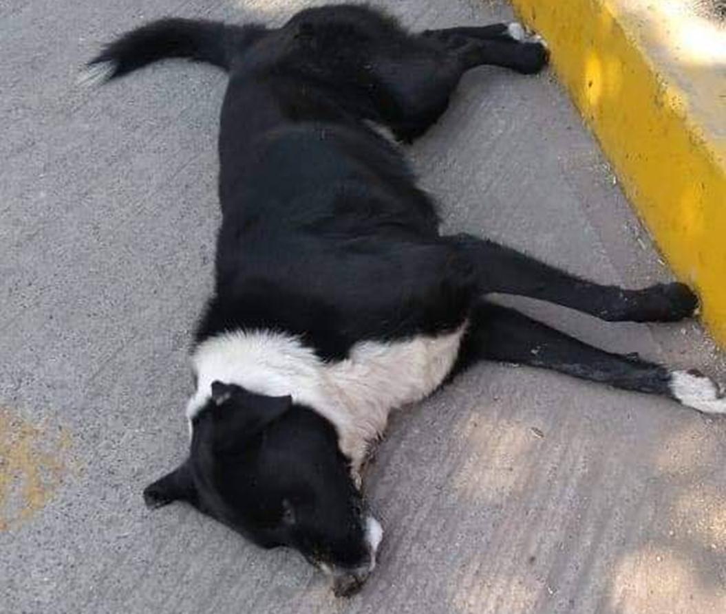 Perros Chilpancingo 2