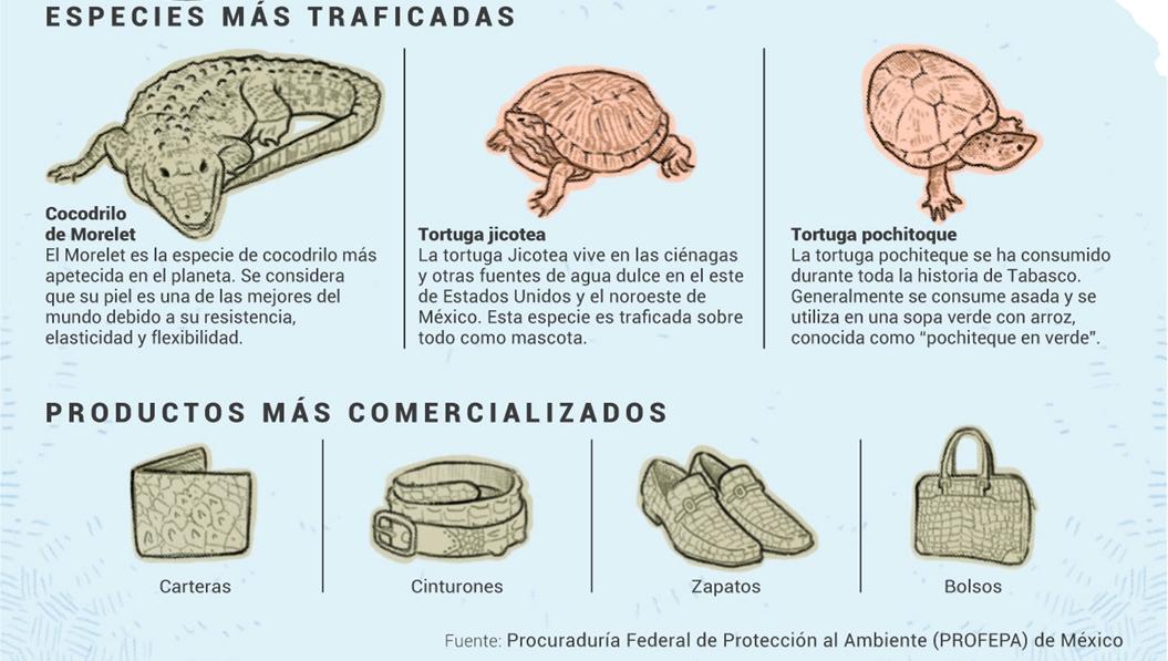 Tráfico de cocodrilos y tortugas